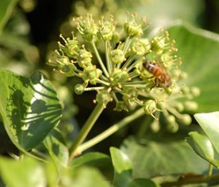 pianta